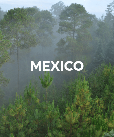 FSC - Investeer in bos - Mexico